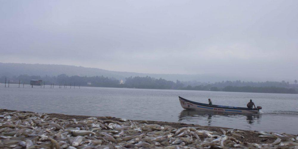 The Goan Fish Tales – I