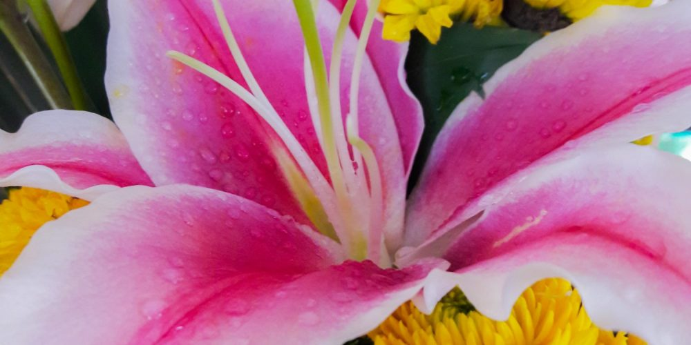 Gift Shops / Florists