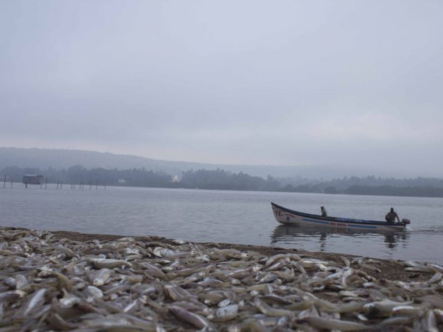 The Goan Fish Tales – I