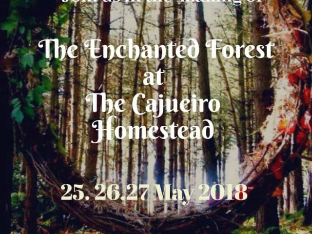 Experience 'The Enchanted Forest' at The Cajueiro Homestead, Valpoi