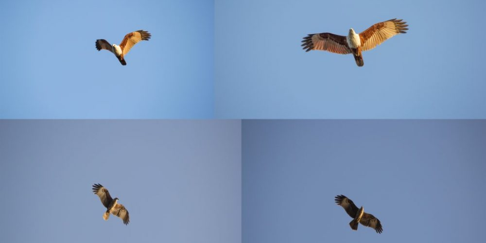 Where to spot Goa's avian beauties
