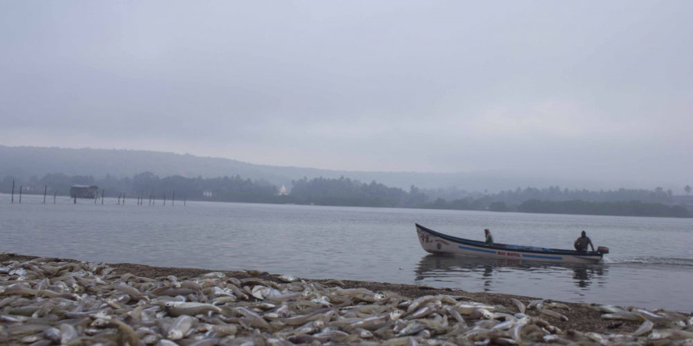 The Goan Fish Tales